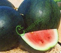 Семена арбуза Арбуз «Сахарный малыш», 1 уп.-4 семени - ранний сорт, известный, для средней полосы. Семенаград - семена почтой
