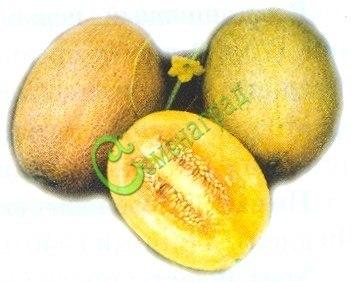 Семена почтой дыня «Алтайская», 4 семени, сверхскороспелая, вызревает от посева семян в грунт даже под С-Петербургом