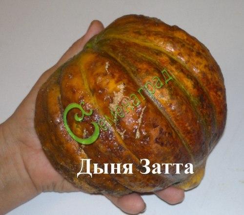 """Семена дыни Дыня """"Затта"""", 1 уп.-4 семени, выведена в Италии - среднеспелый сорт, плоды средних размеров, мякоть жёлто-оранжевая, очень сладкая и плотная, хорошо сохраняется в течение всего зимнего периода. Семенаград - семена почтой"""