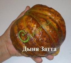 """Семена дыни Дыня """"Затта"""" - 1 уп.-4 семени, выведена в Италии - среднеспелый сорт, плоды средних размеров, мякоть жёлто-оранжевая, очень сладкая и плотная, хорошо сохраняется в течение всего зимнего периода. Семенаград - семена почтой"""