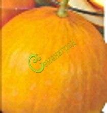 Семена дыни Дыня «Колхозница» - 1 уп.-4 семени - в рекомендациях не нуждается. Семенаград - семена почтой