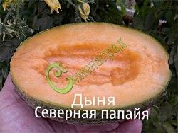 Семена дыни Дыня «Северная папайя» - 1 уп.-4 семени - сверхранняя, сладкая дынька для Центрального региона. Семенаград - семена почтой