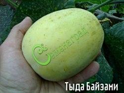 Семена дыни Дыня «Тыдабайзами» - 1 уп.-4 семени, выведена в Китае - миниатюрная (до 500 г), очень ранняя, сладкая, с тонкой кожицей белого цвета и неповторимым ароматом. Семенаград - семена почтой