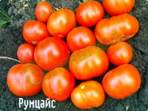 Семена томатов Румцайс (20 семян - низкорослый, ранний, 120 г )