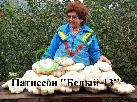 Семена патиссона «Белый -13» - 5 семян - крупный, популярный, урожайный