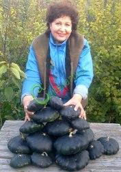 """Семена патиссона Патиссон «Робсон» - выведен в США - 1 уп. - 4 семени, - аналог """"Солнечной вспышки"""", только черный, хорош для зимнего хранения. Семенаград - семена почтой"""
