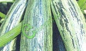 Семена цуккини Цуккини «Куанд», 1 уп.-4 семени - один из лучших, плоды c прерывистыми зелёными полосами. Семенаград - семена почтой