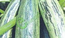 Семена цуккини Цуккини «Куанд» - 1 уп.-4 семени - один из лучших, плоды c прерывистыми зелёными полосами. Семенаград - семена почтой