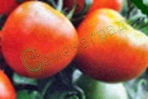 Семена томатов Рытовский (20 семян - низкорослый, ранний, до 100 г)