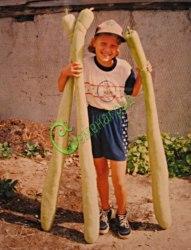 Семена лагенарии Лагенария-вьетнамский кабачок - 1 уп.-4 семени - плоды до 2 м длиной, в молодом возрасте применяют как кабачки. Семенаград - семена почтой