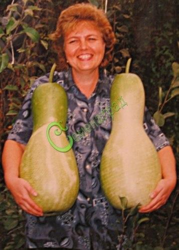 Семена почтой Лагенария-кувшин - 4 семени - лагенария в форме кувшина