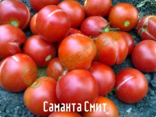 Семена томатов Саманта Смит (20 семян - высокорослый, ранний, до 50 г)