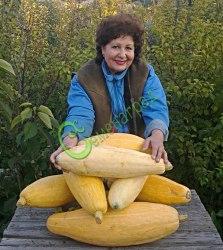 Семена тыквы Тыква «Банан» - 1 уп.-4 семени - относится к виду крупноплодных тыкв, в форме банана, длиной до 70 см. Семенаград - семена почтой