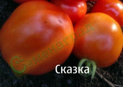 Семена томатов Сказка (20 семян - среднерослый, ранний, транспортабельный, до 150 г)