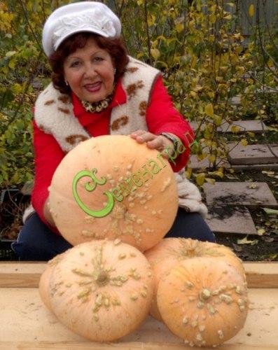 """Семена тыквы Тыква """"Изящный Еусинес"""" - 1 уп.-4 семени, выведена во Франции - относится к виду крупноплодных тыкв, красивая сладкая тыква от 3 до 5 кг. Белые наросты на оранжевой поверхности плода придают ей большое изящество. Семенаград - семена почтой"""