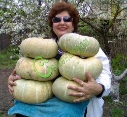 Семена тыквы Тыква «Испанская-73» - 1 уп.-4 семени - относится к крупноплодным голубым тыквам, очень сладкая, с оранжевой мякотью, без терпкости, применяется в сыром виде, может храниться 2 года в комнате. Семенаград - семена почтой