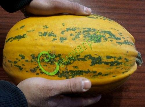 Семена тыквы Тыква «Миндальная -35» - 1 уп.-4 семени - относится к виду твердокорых тыкв, скороспелая, с миндальным ароматом. Семенаград - семена почтой