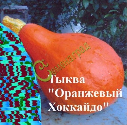Семена тыквы Тыква «Оранжевый Хоккайдо», 1 уп.-4 семени, выведена в Японии - относится к виду крупноплодных тыкв, необыкновенно сладкая и урожайная для средней полосы, можно есть в сыром виде, как морковку, порционная грушевидная тыква, вес 2-3 кг. Семенаград - семена почтой