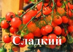 """Семена томатов Сладкий - 1 уп.-20 семян, выведен во Франции, - среднерослый, это новый сорт """"вишни"""" еще слаще и урожайнее, красные, сочные и очень сладкие плоды являются лучшими в своей категории. Семенаград - семена почтой"""