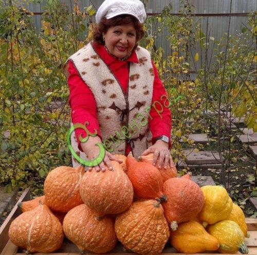 Семена почтой Тыква «Хаббард золотой» - 4 семени, оранжевая, до 4 кг, можно кушать в сыром виде, слаще моркови