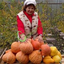 Семена тыквы Тыква «Хаббард золотой» - 1 уп.-4 семени, выведена в США - относится к виду крупноплодных тыкв, веретеновидная, оранжевая в полоску, до 4 кг, можно кушать в сыром виде, слаще моркови. Семенаград - семена почтой