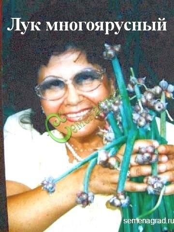 Бульбочки Лук многоярусный - 10 бульбочек, морозостойкий, до -50 С, многолетний пищевой лук, очень ранняя зелень