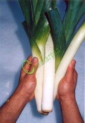 Семена лука Лук порей «Каратанский» - 1 уп.-20 семян - двухлетний, позднеспелый, полуострый, морозостойкий пищевой лук. Семенаград - семена почтой