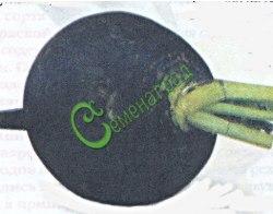 Семена редьки Редька «Ночка» - среднеспелый сорт (70-95 дней). Корнеплод черный, округлый, длиной 8-12 см, диаметром 9-13 см. Мякоть белая, плотная, сочная, остро-сладкого вкуса. Масса 230-350 г. Легко выдергивается. Отлично хранится. Семенаград - семена почтой