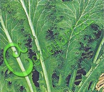 Семена Горчица листовая салатная - 30 семян - обладает не только приятным горчичным вкусом, но и богата витаминами