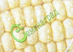 Семена воздушной кукурузы Воздушная кукуруза - кукурузные зерна обладают свойством превращаться в воздушные хлопья. Достаточно смазать дно сковородки несколькими каплями подсолнечного масла, положить в один слой кукурузные зерна, накрыть крышкой и поставить на огонь, чтобы через несколько минут получить полную сковородку румяной воздушной кукурузы. Семенаград - семена почтой