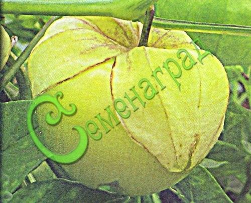 Семена Физалис овощной «Кондитер» - 30 семян, ранний сорт ягода 60-100 г, пригоден для консервирования, варенья, цукатов