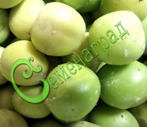 Семена Физалис овощной мексиканский - 30 семян, ранний сорт, плоды от 60 до 100 г, для консервирования, варенья, цукатов