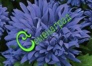 """Семена Астра низкорослая """"Голубой ковёр"""" - 30 семян - высота до 30 см"""