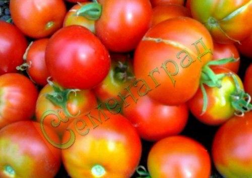 Семена почтой томат Японский комнатный (20 семян - низкорослый, ранний, до 120 г)