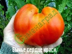 Семена томатов Бычье сердце красный - 1 уп.-20 семян - высокорослый, до 500 г, ранний. Семенаград - семена почтой