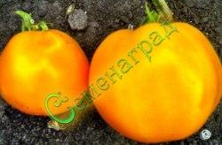 Семена томатов Бычье сердце оранжевый - 1 уп.-20 семян, - высокорослый, до 500 г, ранний. Семенаград - семена почтой