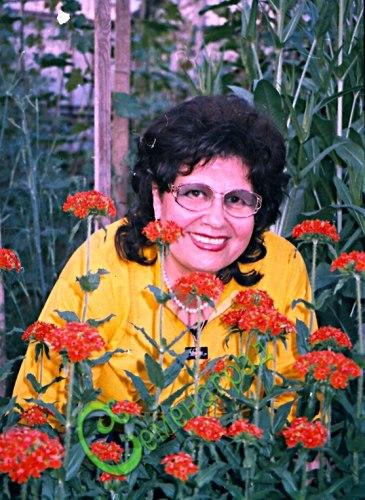 Семена лихниса Лихнис халцедонский - 1 уп.-30 семян - многолетник, цветки с 5-ю лепестками, собранные в крупные шарообразные красные соцветия высотой до 1 м, очень хороши для срезки и клумб. Семенаград - семена почтой