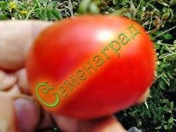 Семена томатов Вкусный - 1 уп.-20 семян - среднерослый, ранний, до 200 г, впечатляет. Семенаград - семена почтой