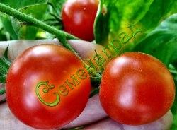 Семена томатов Гаврош - 1 уп.-20 семян - до 100 г, скороспелый, усыпной, среднерослый. Семенаград - семена почтой