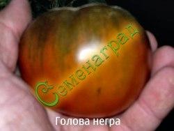 Семена томатов Голова негра - 1 уп.-20 семян - среднерослый, до 300 г, сладкий, кроваво-черный. Семенаград - семена почтой