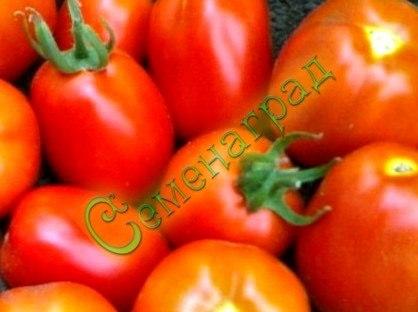 Семена томатов Ладный - 1 уп.-20 семян - среднерослый, среднеранний, до 160 г, овальный, красив, транспортабельный. Семенаград - семена почтой