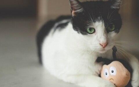 Игрушка TRIXIE в виде 2 мячиков с кошачьей мятой и перьями на веревке, 2шт*4,5 см