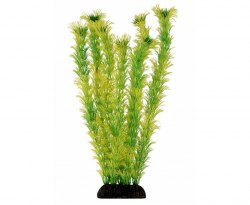"Растение Laguna ""Амбулия"" жёлто-зеленая, 300мм, (пакет)"