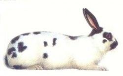 Корм В НАЛИЧИИ Baks для кроликов, 500 г