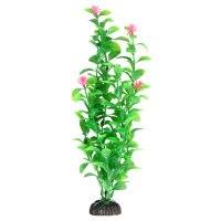 Растение В НАЛИЧИИ Laguna Незея цветущая, 300мм