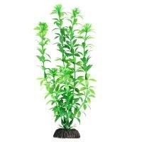 Растение В НАЛИЧИИ Laguna Гемиантус зеленый, 300мм