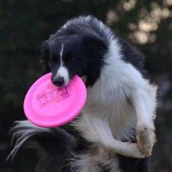 Игрушка В НАЛИЧИИ для собак Frisbee Super 23,5 см