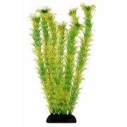 Растение В НАЛИЧИИ Laguna Амбулия желто-зеленая, 200мм